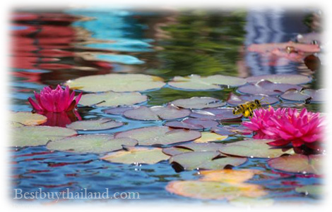 Thai Herbal Scrub - Sacred Lotus Pollen